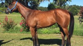 Lady Tutu, Kenwood Racing